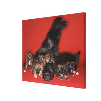 Mother dog with puppies stretched canvas print