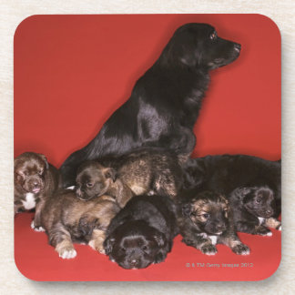 Mother dog with puppies coaster