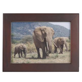 Mother elephant walking with elephant calf keepsake box