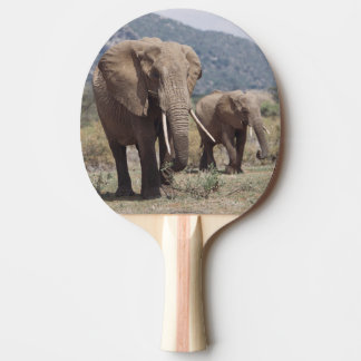 Mother elephant walking with elephant calf ping pong paddle