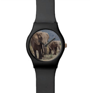 Mother elephant walking with elephant calf watch