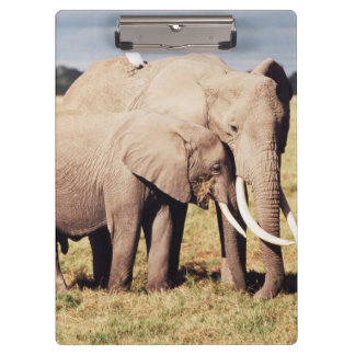 Mother elephant with young clipboard