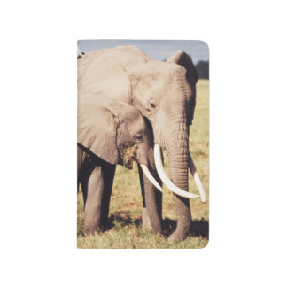 Mother elephant with young journal