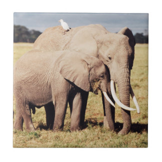 Mother elephant with young tile