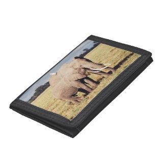 Mother elephant with young tri-fold wallets