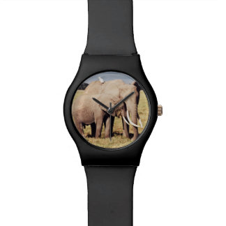 Mother elephant with young watches
