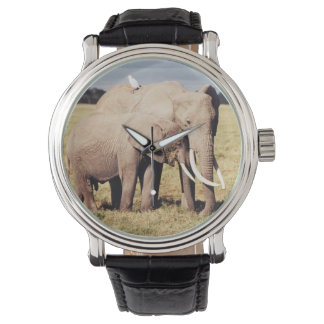 Mother elephant with young wrist watches