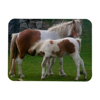 Mother & Foal Ponies Bodmin Moor Cornwall England Magnet