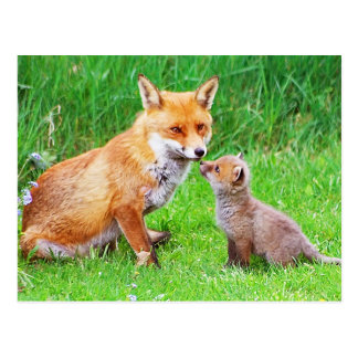 Mother fox and cub post cards