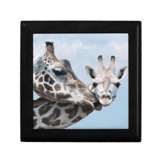 Mother giraffe kisses her calf gift box