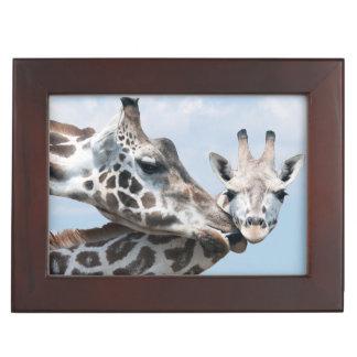Mother giraffe kisses her calf keepsake box