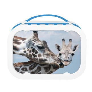 Mother giraffe kisses her calf lunch box
