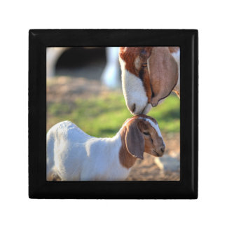 Mother Goat & Baby Gift Box