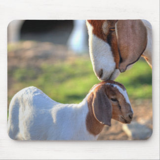 Mother goat kissing her baby on head. mouse pad