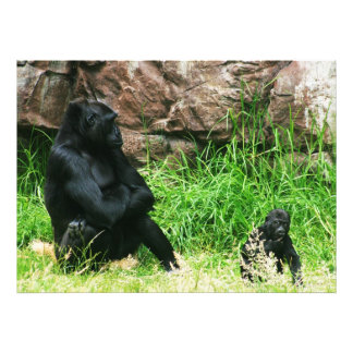 Mother Gorilla Watching Her 8 Month Old Baby Boy Photographic Print