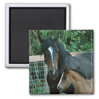 MOTHER HORSE SQUARE MAGNET