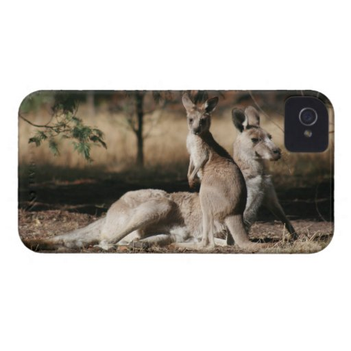 Mother Kangaroo and Joey Relaxing iPhone 4 Covers