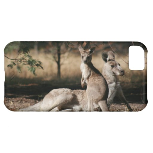 Mother Kangaroo and Joey Relaxing Case For iPhone 5C