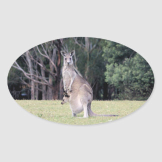 Mother Kangaroo with Baby Joey in Her Pouch Oval Stickers