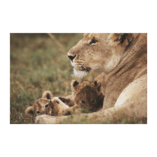 Mother Lion sitting with cubs Canvas Print
