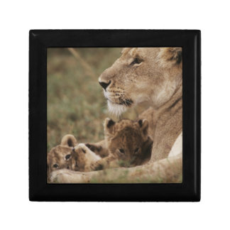 Mother Lion sitting with cubs Gift Box