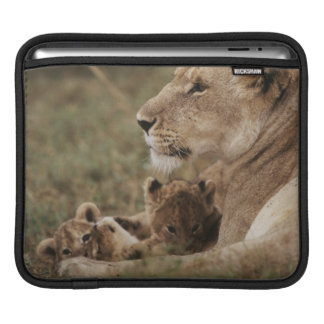 Mother Lion sitting with cubs iPad Sleeve
