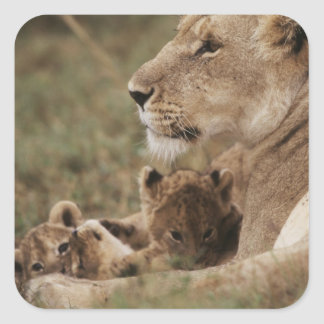 Mother Lion sitting with cubs Sticker