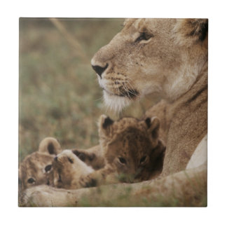 Mother Lion sitting with cubs Tile