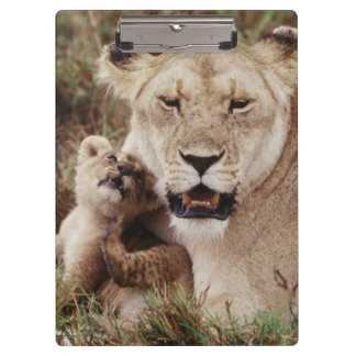Mother lion sitting with her cub clipboard
