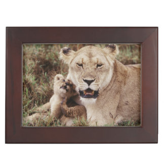 Mother lion sitting with her cub keepsake box