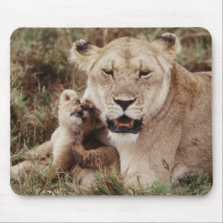 Mother lion sitting with her cub mouse mat