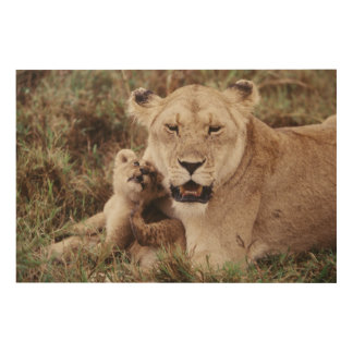 Mother lion sitting with her cub wood wall art