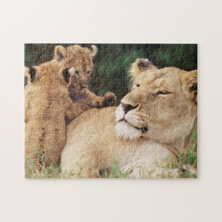 Mother lion with cubs jigsaw puzzle