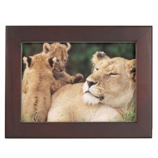 Mother lion with cubs keepsake box
