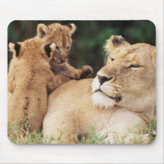 Mother lion with cubs mouse mat