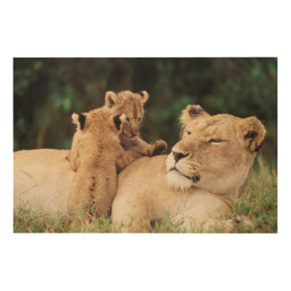 Mother lion with cubs wood print