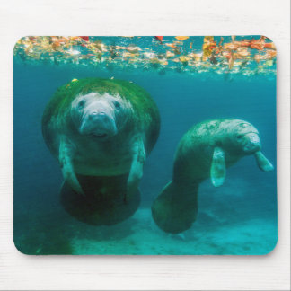 Mother manatee with her calf in Crystal River Mouse Mat