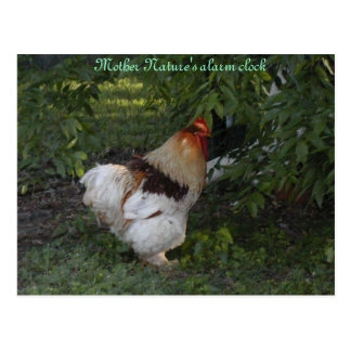 Mother Nature s alarm clock Post Cards