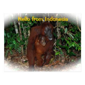 Mother Orangutan and Baby in Nature Postcard