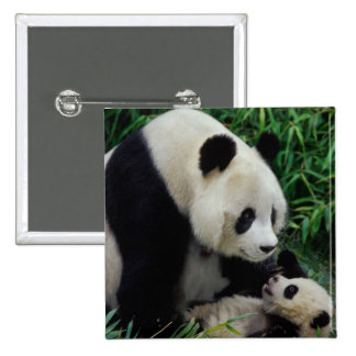 Mother panda and baby in the bamboo bush, Wolong 15 Cm Square Badge