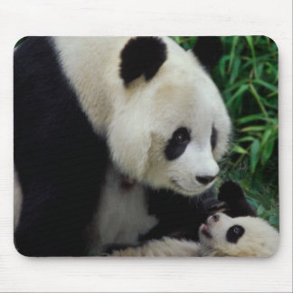 Mother panda and baby in the bamboo bush, Wolong Mouse Mat