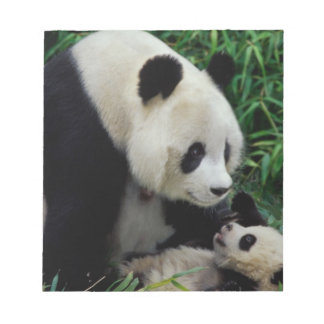 Mother panda and baby in the bamboo bush, Wolong Notepad