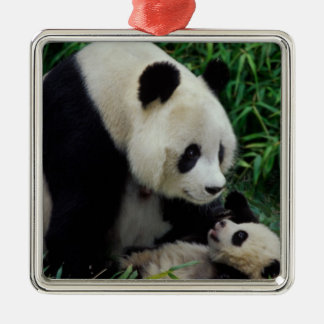 Mother panda and baby in the bamboo bush, Wolong Silver-Colored Square Decoration