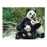Mother Panda Postcards