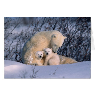 Mother Polar Bear Sitting with Twins, Card