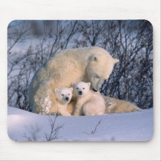 Mother Polar Bear Sitting with Twins, Mouse Mat