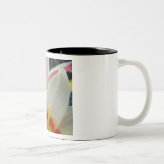 MOTHER'S DAY MUGS GIFTS 4 Tulips Mom Mothers