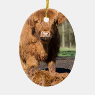Mother scottish highlander cow near newborn calf christmas ornament