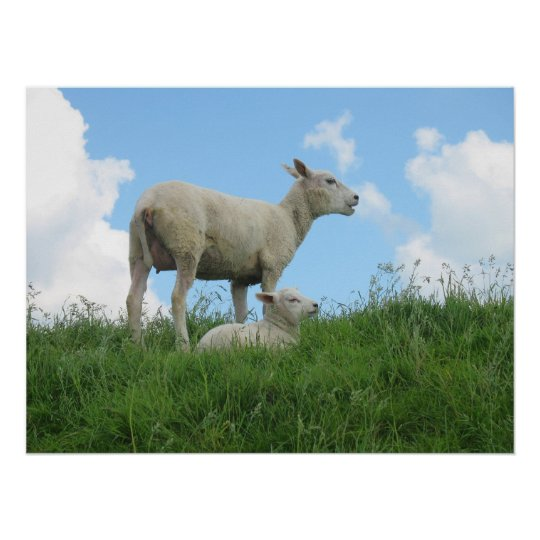 Mother Sheep and Her Lamb Grass Photo Poster
