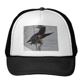 Mother swallow cap